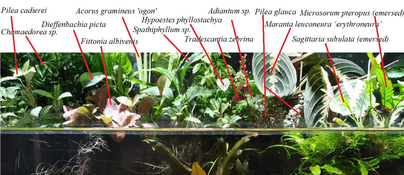 plantlist.png