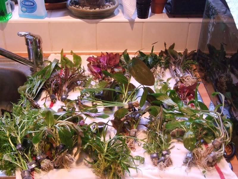 Plants-DSCF9300.jpg