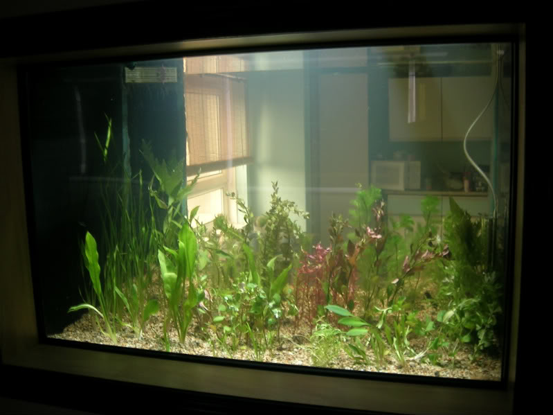 plants008.jpg