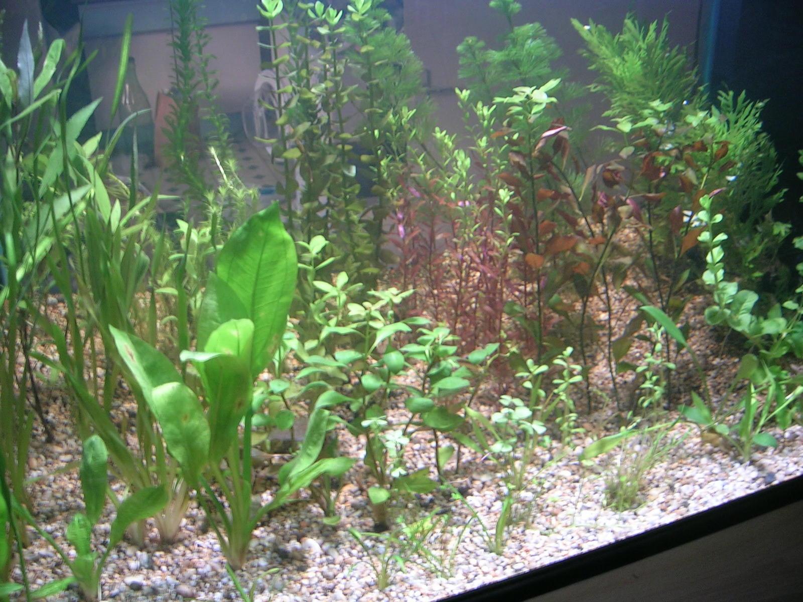plants014.jpg