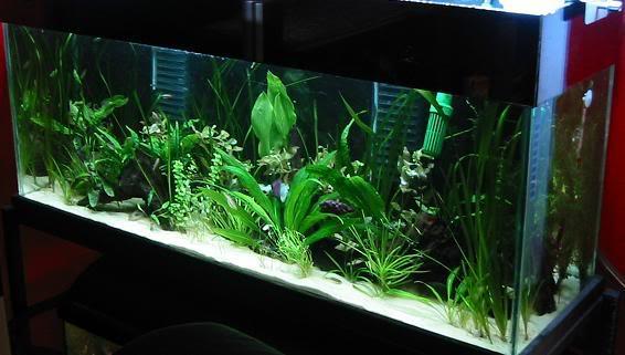 plantsadded2.jpg
