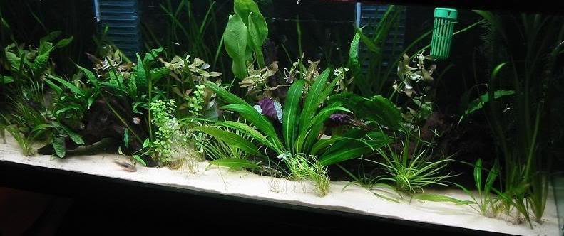 plantsadded3.jpg