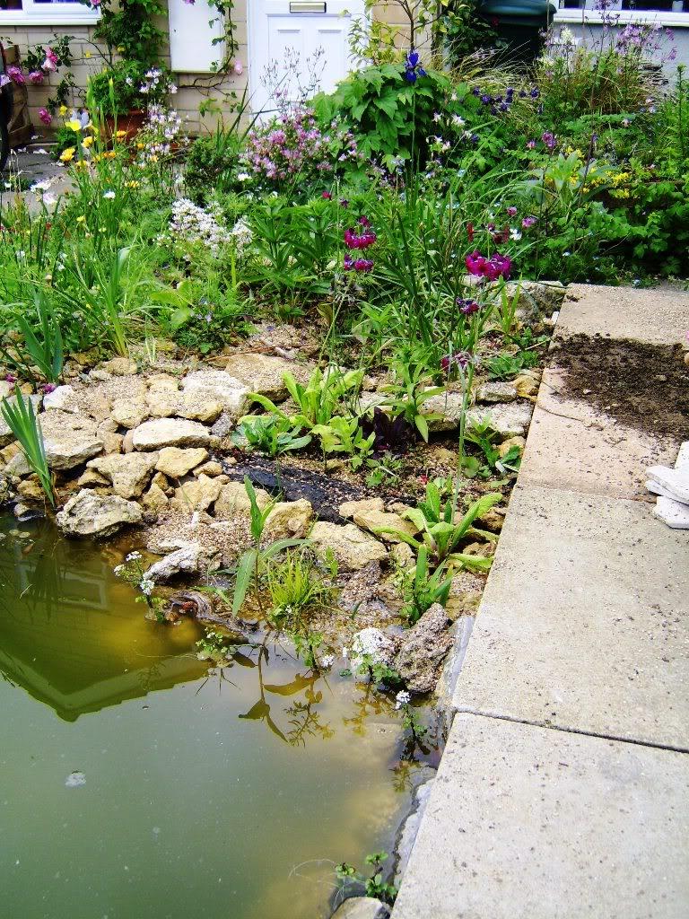 pond1web-1.jpg