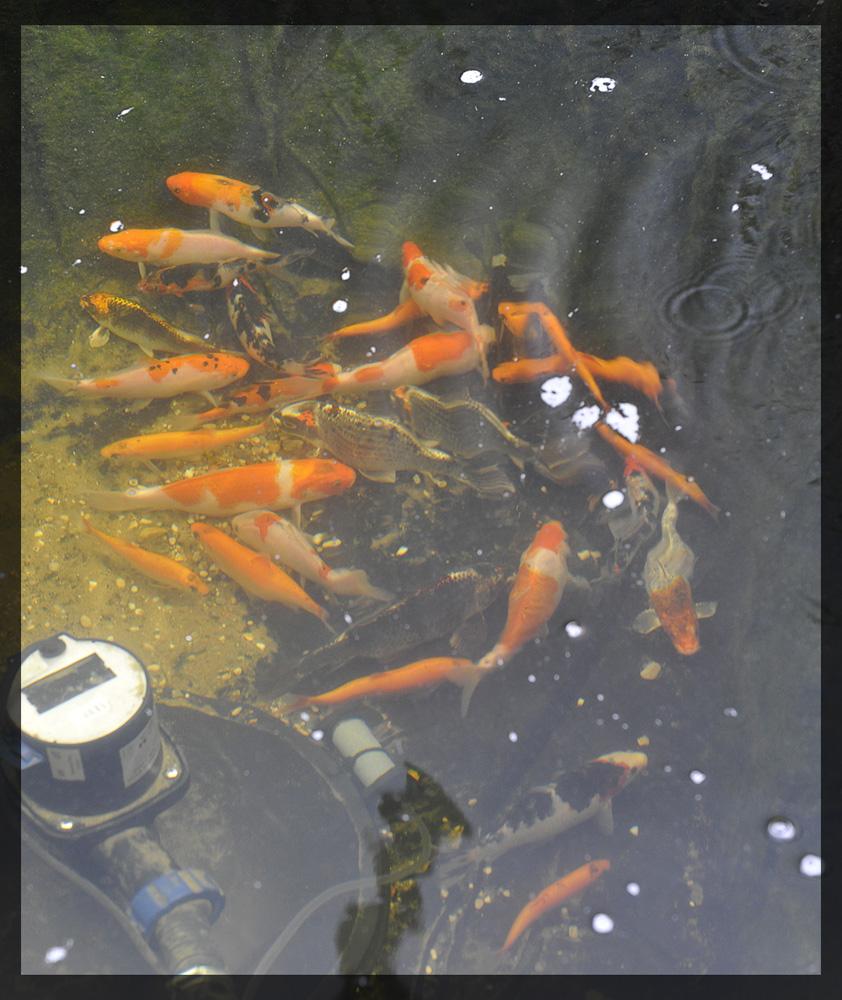 Pond9.jpg