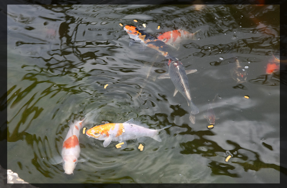 Pond_3.jpg