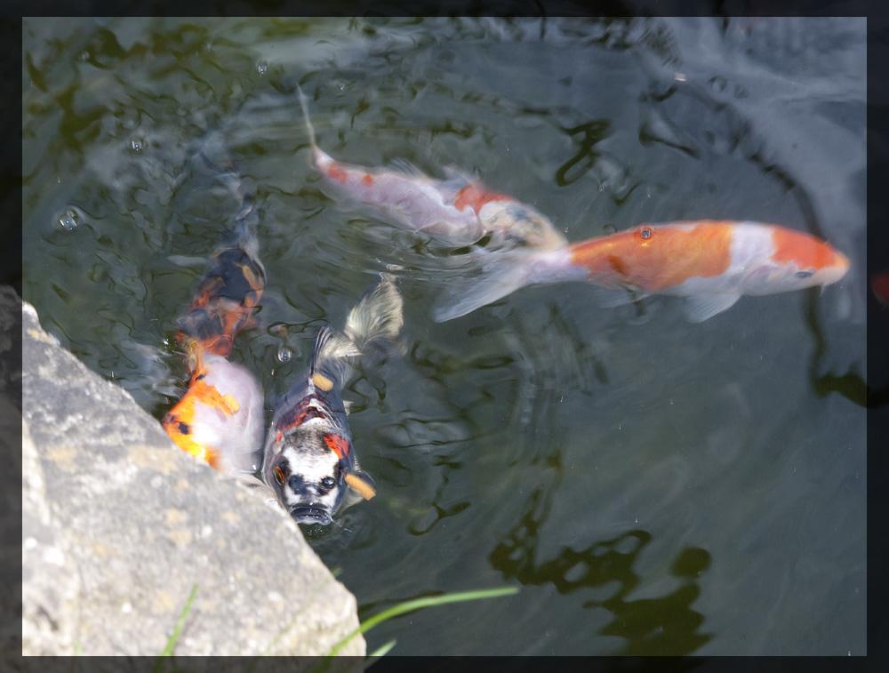 Pond_6.jpg