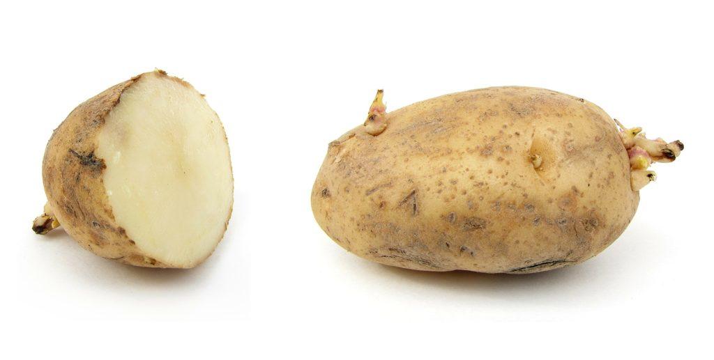 potato-67633_1920-1024x517.jpg