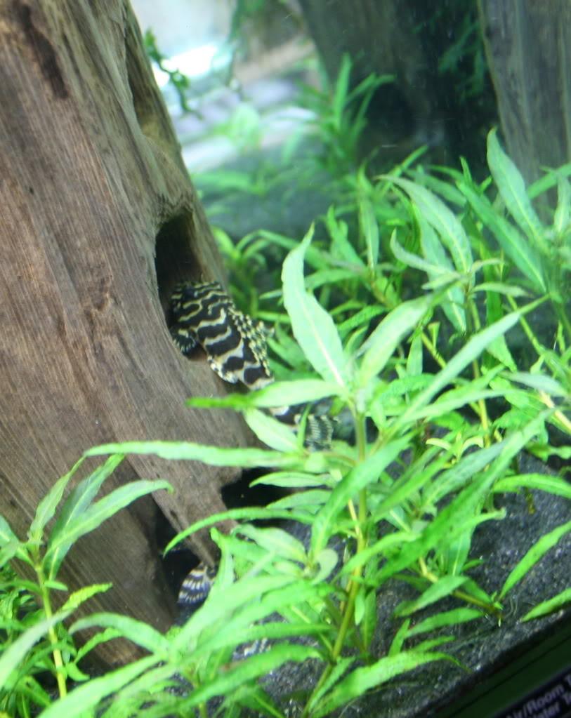 redoneleopard.jpg