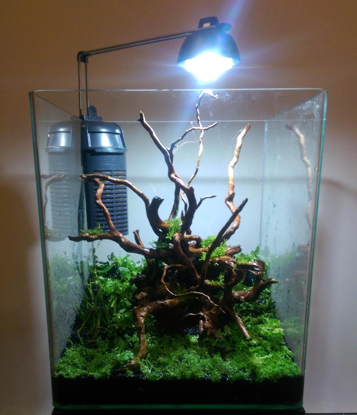 First planted tank hi tech nano uk aquatic plant society for Plante nano aquarium