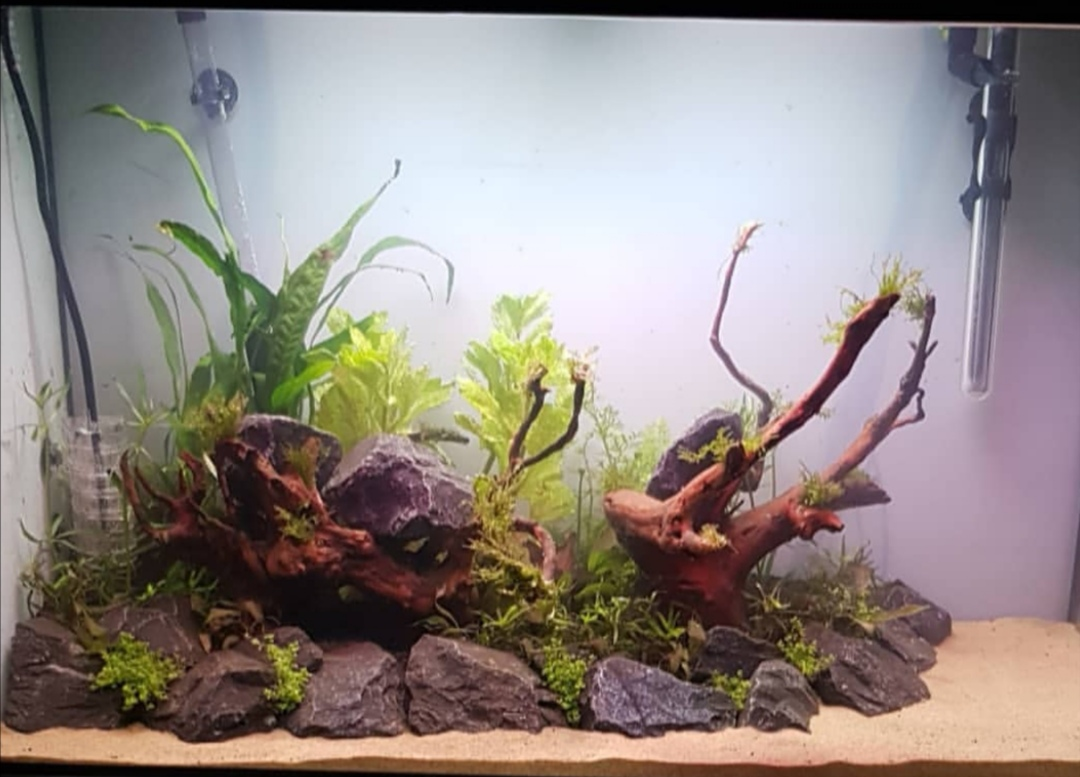 First Aquascape Idea Id And Direction Please Uk Aquatic Plant Society