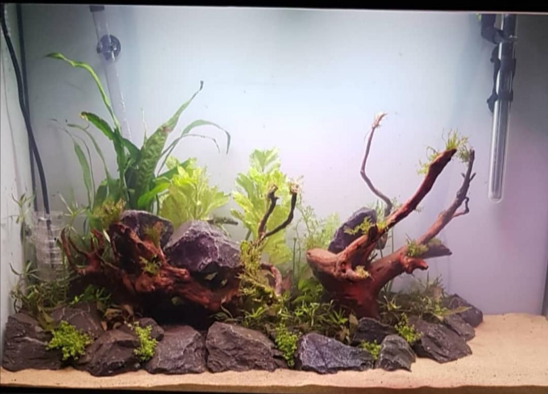 First Aquascape Idea Id And Direction Please Uk Aquatic Plant Society