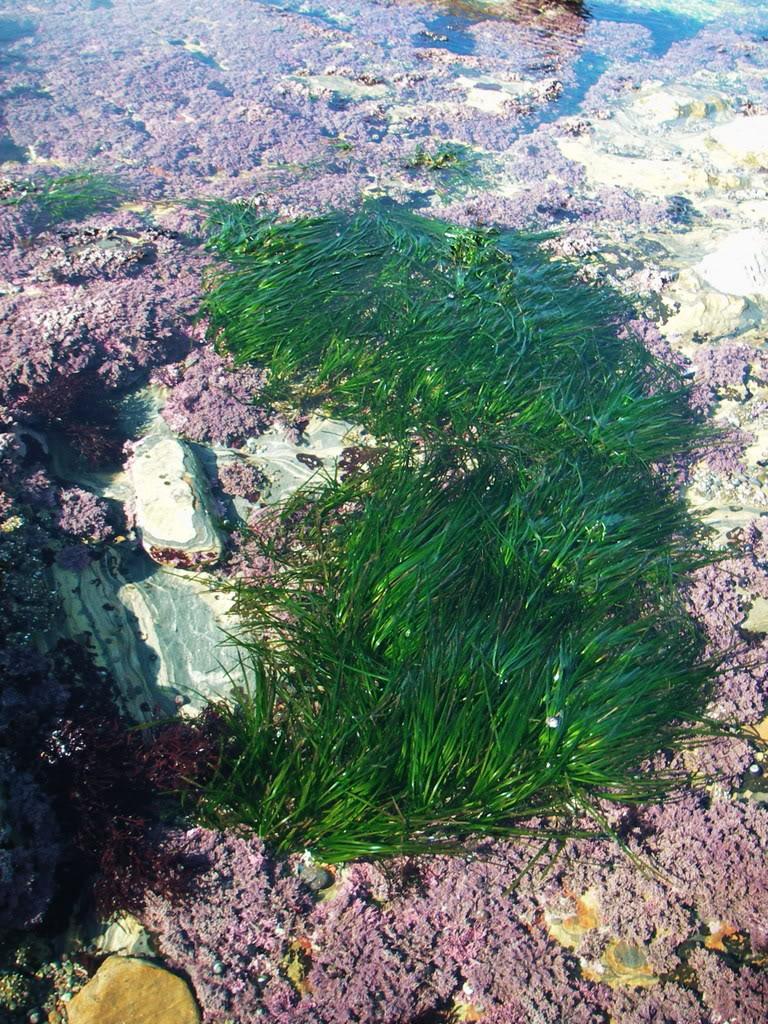 seagrassandredalgae2.jpg