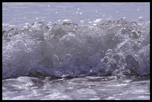 seaweb.jpg