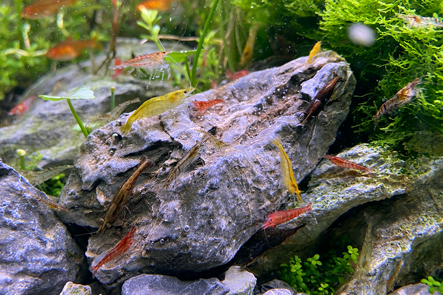 ShrimpRock.jpg