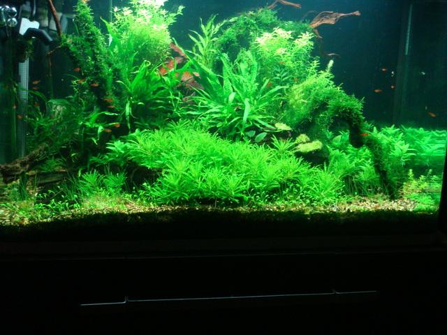 shrimps006.jpg