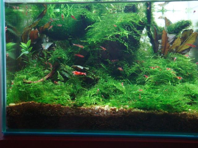 shrimps014.jpg