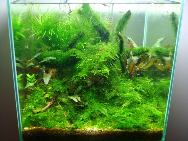 shrimps026.jpg