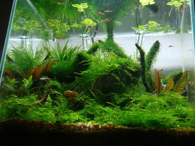 shrimps029.jpg