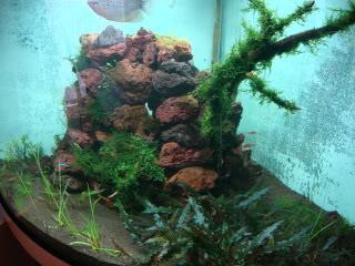 ShrimpTank15.jpg