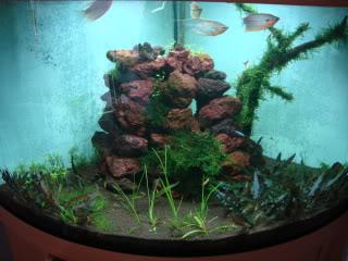 ShrimpTank17.jpg