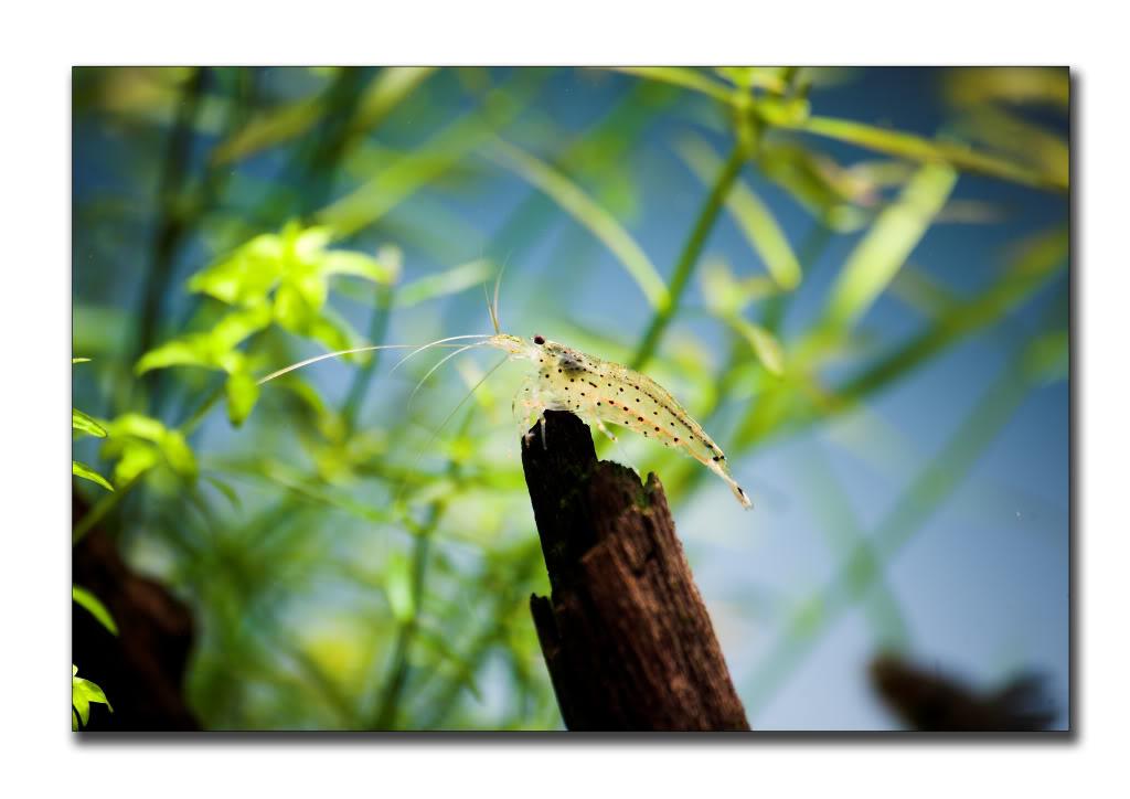 shrimpy-1.jpg