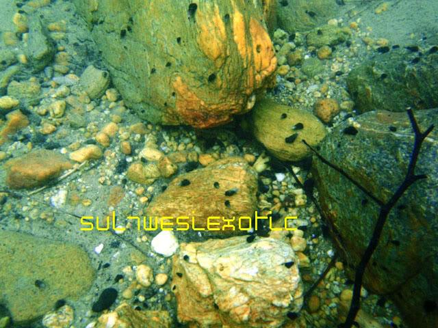 snails3.jpg