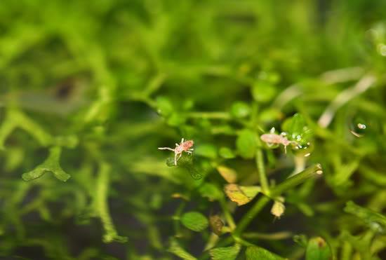 springtail_550.jpg