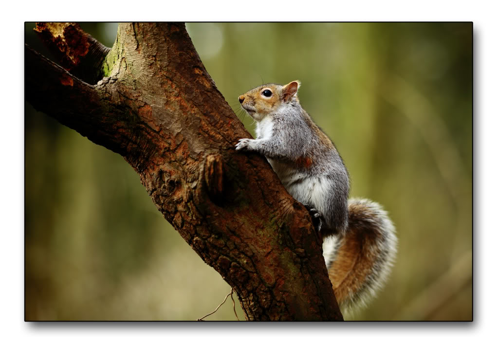 squirrel2-1.jpg