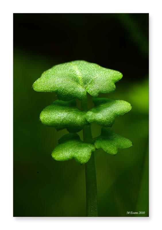 strange-plant0003-2.jpg