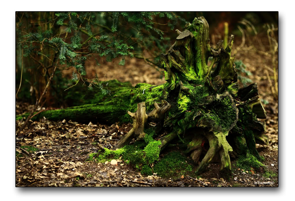 stumpy4.jpg