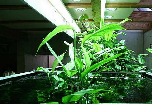 takashiamanoshometank3yr9.jpg