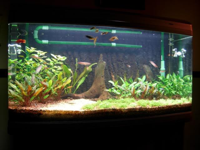 Tank09052009.jpg