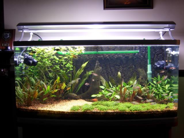 Tank24052009.jpg