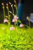 th_Ug_flower.jpg