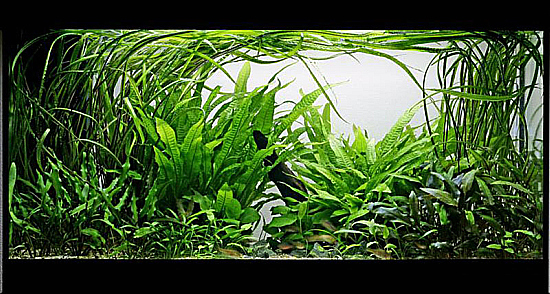 Top-20-Aquascapes-by-George-Farmer-41.jpg