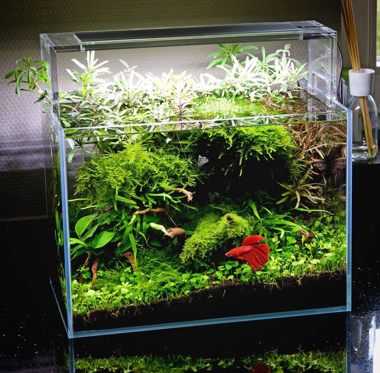 Oliver Knott Betta Scape Uk Aquatic Plant Society