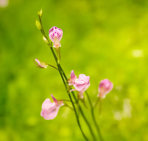 Ug_flower3.jpg