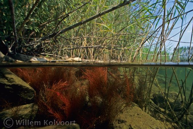 wortels_van_de_wilg_net_onderwater_rezwt_w675_h450.jpg