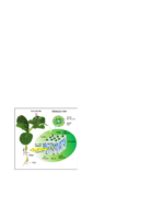 Schematic-diagram-of-nanoparticle-transport-inside-watermelon-plants-The-stoma-openings.png