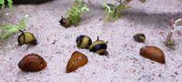 snail 1.png