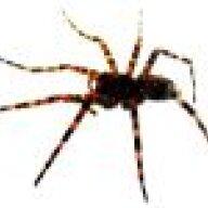 spider72