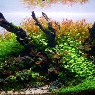 Nano Forest Aquascape 45x30x30 Uk Aquatic Plant Society