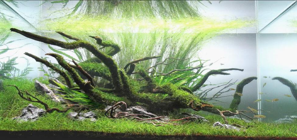 Aquascaping Styles By George Farmer Uk Aquatic Plant Society