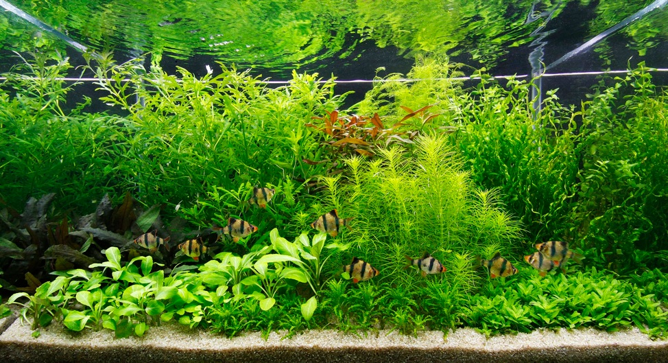 Aquascaping Styles By George Farmer Uk Aquatic Plant Society