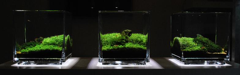 ... Anyone has success in mini aquascape with betta tank less than 20cm