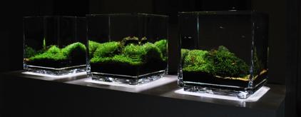 A World Apart By James Starr Marshall Uk Aquatic Plant Society